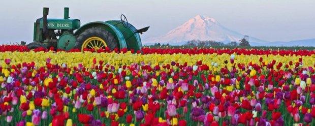 tulip-fest-gallery10.jpg